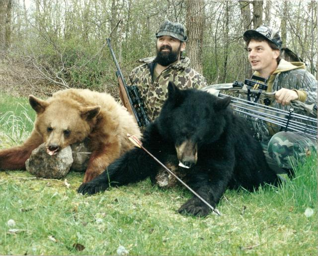 Black Bear in Colour Phases - Blonde & Black. : Blonde Bear harvested with Rifle, and Black Bear harvested with Archery Equipment