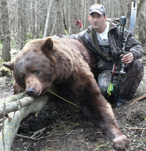 Black Bear Cinnamon Hunt Ontario
