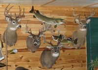 Ontario Lodge, Ontario Deer Hunting, Fishing Trips, Fishing Northern, Walleye Fishing